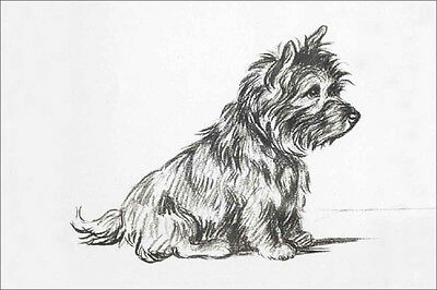 Cairn Terrier Dog 1940 Sketch by Lucy Dawson  LARGE New Blank Note Cards