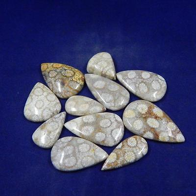 128.1 Cts 100% Natural Incredibly Designer Fossil Coral Lot Cabochon L#46-58