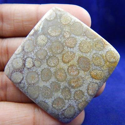 76.2 Cts 100% Natural Incredibly Designer Fossil Coral Cabochon L#46-51