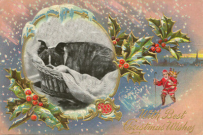 Boston Terrier Dog 1930's Photo LARGE New Christmas Note Cards