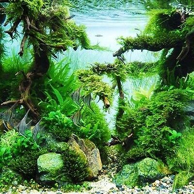 Aquarium Plant Seed 25 Types 100 Seeds Water Fish Plant Moss Grass Local Farmer