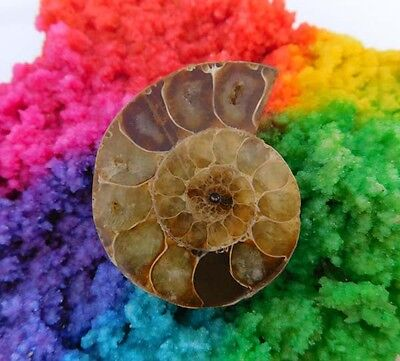 95 Cts. 100% Natural Matched Ammonite Shell  Mineral Specimen (NH121)