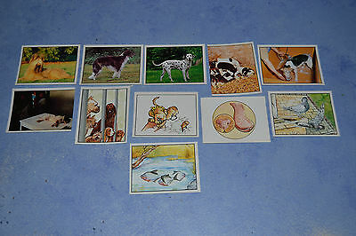 "Lot de 11 images Panini "" Animaux familiers """