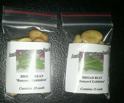 BROAD BEANS 'Bunyard Exhibition' 30 Organic Heirloom  Fava seeds Aunty K's Seeds