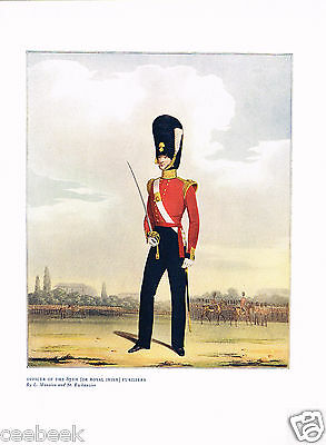 Officer Of The 87th (Or Royal Irish) Fusiliers Antique Military Picture Print