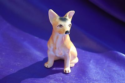 Vintage Cute Chihuahua taco dog Great face!!