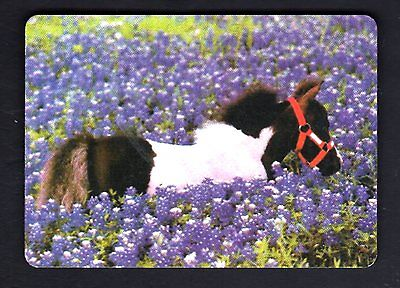 WIDE Swap/Playing Card - Pony in Field of Flowers