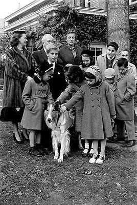 Lassie The  Famous Film And Tv Dog With Tommy Rettig  8X10 Photo 20