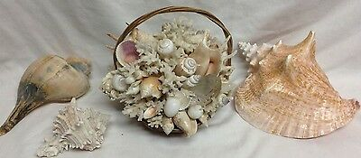 Seashell Bathroom Decor 4 Pc. Lot Basket And Large Shells Pink Queen