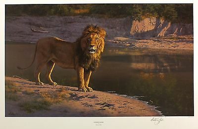"ANTHONY GIBBS ""Evening Glare"" lion SIGNED LTD EDITION! SIZE:49cm x 72cm NEW RARE"