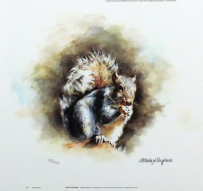 "MANDY SHEPHERD ""Grey Squirrel"" wildlife LTD ED SIGNED! SIZE:23cm x 24cm NEW RARE"