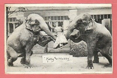 Vintage Lockhart Traveling Circus Elephants Molly & Waddy Postcard