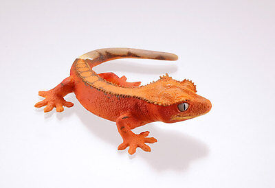 Kaiyodo Museum Q Gecko Part 2 Red Crested Gecko Lizard Figure