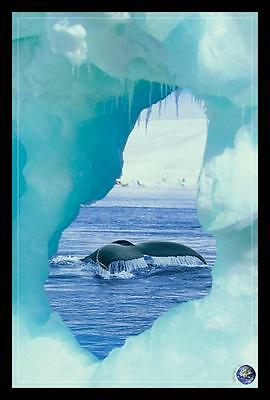 FRAMED Whale Tail - Iceberg - Save our Planet 36x24 Art Print Poster Tale