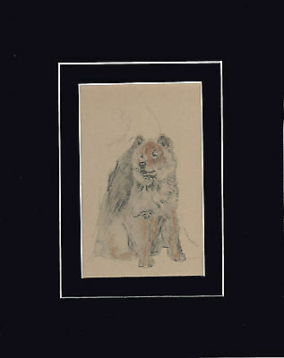 """Nice Vintage Chow-Chow Dog  Print 1934  by Cecil Aldin 8x10"""" Matted"""