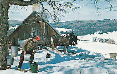 Maple Sugar Time Pouring Sap into Buckets at VERMONT Sugar Shack Postcard