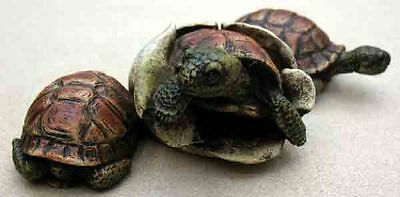 Castagna Critter Figurines -Baby Turtles (3)- Mixed Media, Item 0087