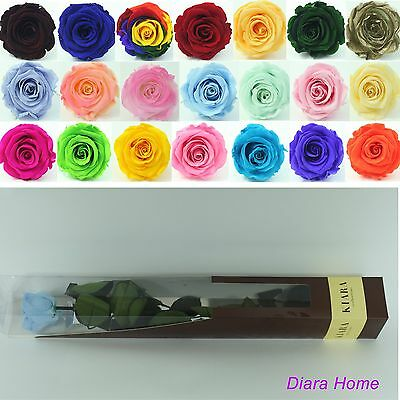 Blue Rose Flower Preserved 100% Fresh Natural last up to 3 years no water