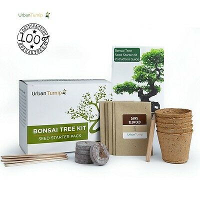Bonsai Tree Kit Indoor Grow Your Own 5 Tree Varieties Instruction Included