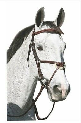 HDR Pro Figure 8 Bridle Padded Mono Crown with Reins Black Horse