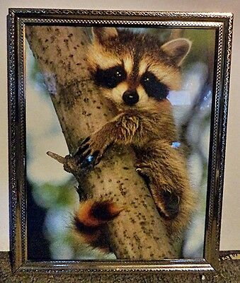 Adorable Raccoon Picture