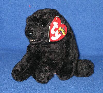TY CINDERS the BLACK BEAR BEANIE BABY - MINT with MINT TAG