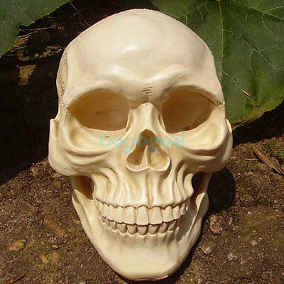 Rubber Latex Mould Mold Molds New Life Size Replica Realistic Human Skull