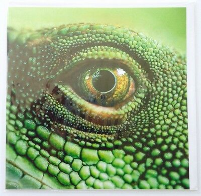 Lot Of 6 Pierre Belvedere Blank Greeting Cards Green Reptile Eye Glitter Sparkle