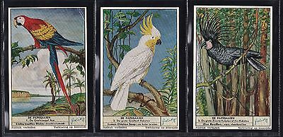 Liebig, Parrots (F1621 S1621) Set Of 6 Issued In 1955.