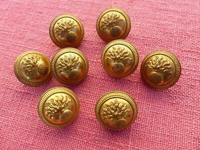 Lovely Vintage French Brass Buttons Military - Paris