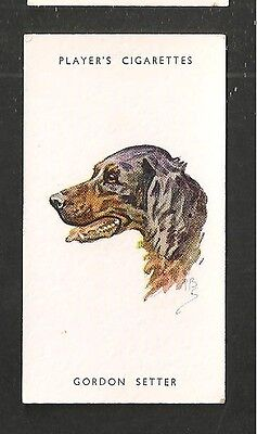 GORDON SETTER Black and Tan Setter  Fourth Duke of Gordon 1930's print card