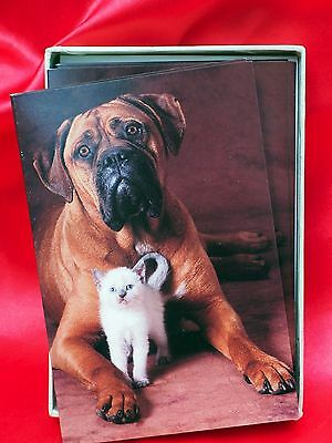 Mastiff BIG dog w small Siamese kitty cat  12 Blank Cards w envelopes!!  NICE!!