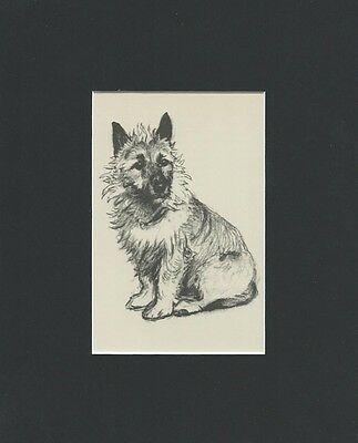 VINTAGE Border Terrier Dog 1939 Print by Cecil Aldin  8 X 10