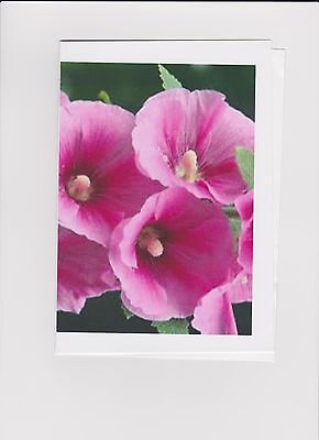 50 Pink Hollyhock Seeds Can Be Sown Now Easy To Grow