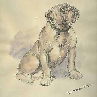 Vintage Hand Coloured Picture Of Bulldog - The Incorruptible - K.F. Barker 1933
