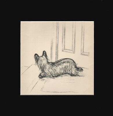 Vintage Skye Terrier Dog Print 1938 by  G. Vernon Stokes 1936 12  X 12 Mat