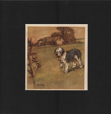 Vintage Old English Sheepdog  Print 1947 VERNON STOKES 12X12 Mat