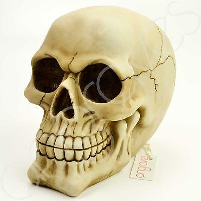 Rubber Latex Mould Mold Molds New Large Human Skull Skeleton