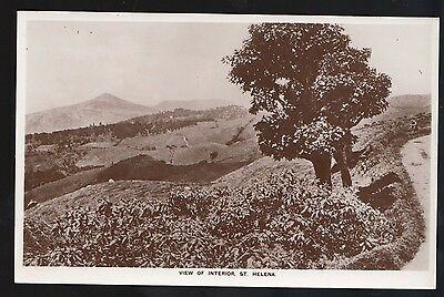 St Helena View of the Interior Real Photo Postcard