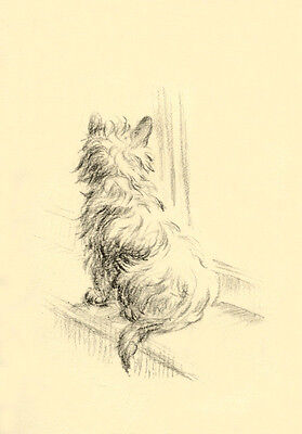 Cairn Terrier Dog 1946 Sketch by Lucy Dawson ~ LARGE New Blank Note Cards