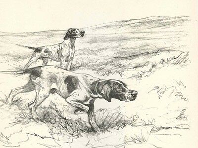 Pointer Dogs by G. Vernon Stokes 1938  LARGE New Blank Note Cards