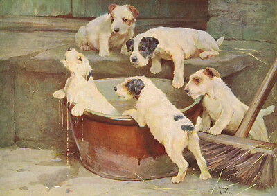 Jack Russell Terrier Puppies VS. Turtle  C. REICHERT LARGE New Blank Note Cards