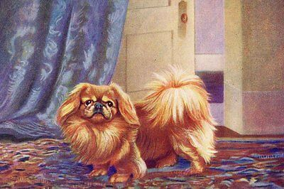 Pekingese Dog Drawing by Ward Binks 1931 - LARGE New Blank Note Cards