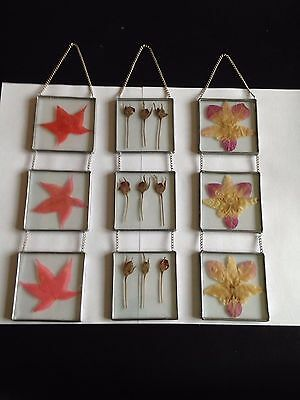 Dried Pressed Flower Glass & Metal Wall Decoration set of 3