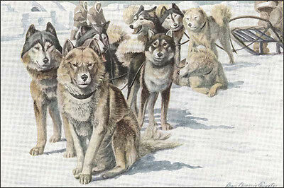 Alaskan Malamute Sled Dogs 1920's ~ New  Large Note Cards