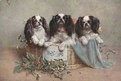 Cavalier King Charles Spaniel Dogs C REICHERT 8 Large New Blank XMAS Note Cards