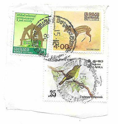 sri lanka stamps on a piece - animal theme - mouse deer and bird - see scan