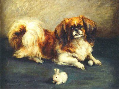 Pekingese Dog 1925 Drawing by Florence Jay - LARGE New Blank Note Cards