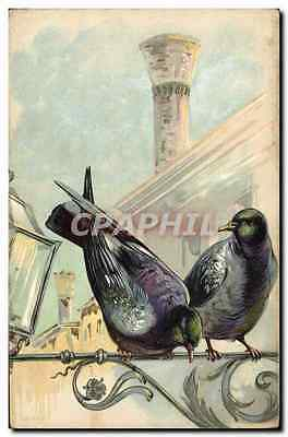CPA Colombe Colombophilie Pigeons