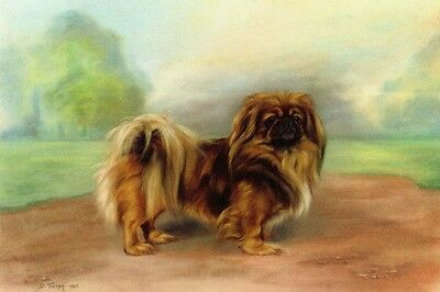 Pekingese Dog Art Print by D. Tucker 1935  - LARGE New Blank Note Cards